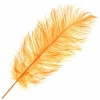 """Ostrich Drab Feathers 14-16"""" Premium Quality Golden"""
